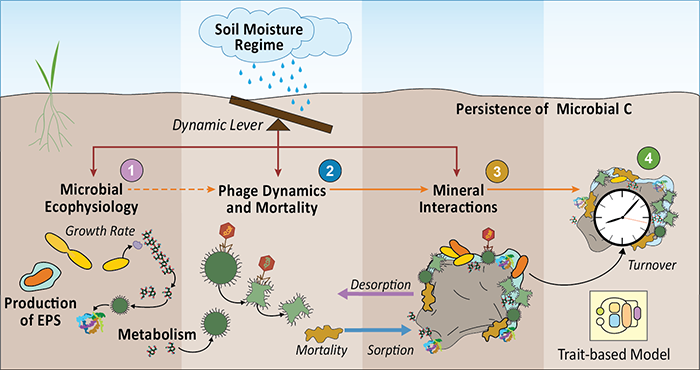 Overview of the Microbes Persist SFA