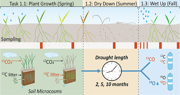 Objective 1 experiments are framed around the three seasonal moisture periods in Mediterranean grasslands: spring growth, summer drought, and fall wet-up.