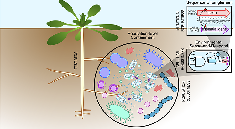 Multilayerd containment strategies in the rhizosphere